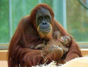 Foto: Tierpark Hellabrunn/ Sarah Held