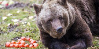 Tierpark Hellabrunn: Alles Gute zum Vierzigsten, Olga!