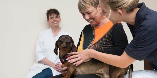 Tiertherapeutische Expertise In Der Schlaganfallreha Im Klinikum