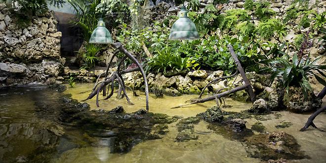 Lebensraum Mangrove in Hellabrunn