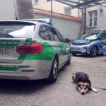 Mehr als sieben Stunden im engen Kofferraum - Hund aus aufgeheiztem Pkw befreit