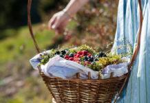 Alpines Super Food – gewusst wie: Wilde Waldküche am Südtiroler Ritten