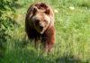 Tierpark Hellabrunn: Braunbärin Olga ist tot