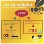 Richtiges Verhalten bei Insektenstichen