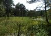 Hellabrunn engagiert sich für Erhalt von heimischen Moorflächen