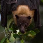 Bat Night - Wochenende der Fledermäuse in Hellabrunn