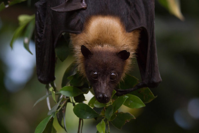 Bat Night - Wochenende der Fledermäuse in Hellabrunn