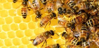 Neues Bienen-Zuhause in Ramersdorf