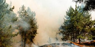 Waldbrandgefahr spitzt sich weiter zu