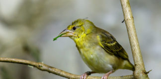 Tierpark Hellabrunn: Neue Bewohner in der Fledermausgrotte