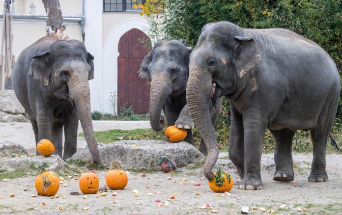 Halloween für Groß und Klein in Hellabrunn