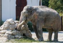 Blick hinter die Kulissen im Tierpark Hellabrunn