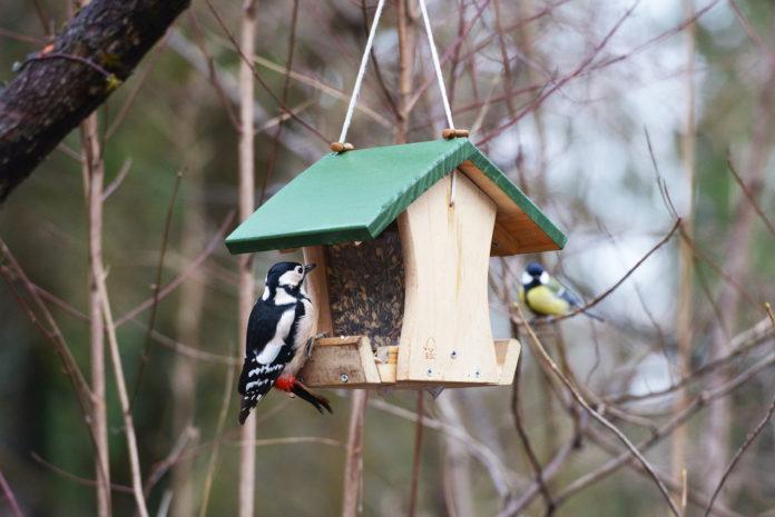 Vogelschutz im Tierpark Hellabrunn