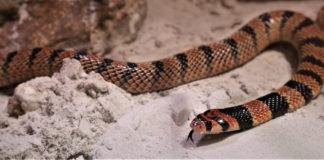 Neue Bewohner der Giftschlangenhalle im Tierpark Hellabrunn