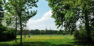 Städtische Baumbilanz erneut positiv