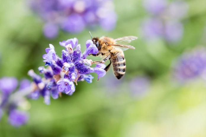 """Eintragungszeitraum zum Volksbegehren """"Rettet die Bienen!"""" startet"""