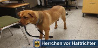 Hund auf Beamte gehetzt - Schwarzfahrer mit Hund heute vor Haftrichter