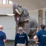Tierpark Hellabrunn - Medical Training
