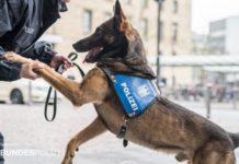 Kinder allein unterwegs - Diensthund verkürzt Wartezeit