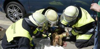 Au-Haidhausen: Feuerwehr befreit Hund unter Auto