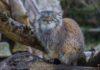 Pfingsten in Hellabrunn: Aktionswochenende Berge, Wälder und Wiesen