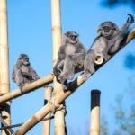 Tierisch musikalisch: Das Münchner Rundfunkorchester im Tierpark Hellabrunn