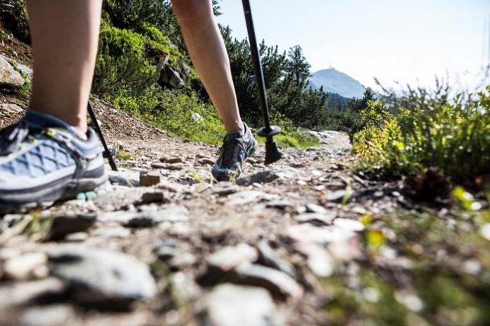 Königin der Alpen: Die Zirbe ist in der Ferienregion Hall-Wattens äußerst präsent und lädt zum Wandern, Erleben und Genießen ein