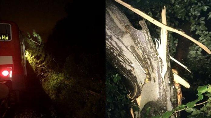 Baum in Oberleitung und Zugdach gekracht