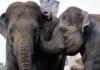 Veranstaltungstipp: Blick hinter die Kulissen im Tierpark Hellabrunn