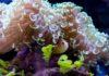 Hellabrunns bunte Unterwasserwelt