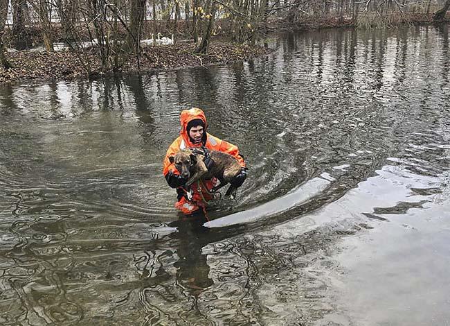 Mischlingshündin durch die Feuerwehr von einer Insel im Entenweiher gerettet