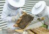 Bienenschutz: Imker aus ganz München gesucht