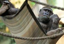 Der Tierpark Hellabrunn in Zeiten der Corona-Krise