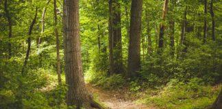Vorsicht im Wald – hohe Waldbrandgefahr!