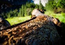 Waldbesitzer aufgepasst: Borkenkäfer schwärmen aus!