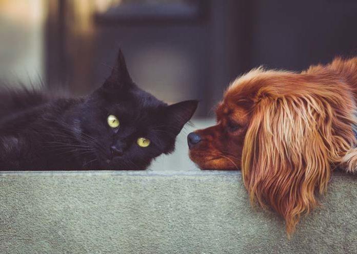 Meldepflicht bei Corona-Infektionen von Haustieren