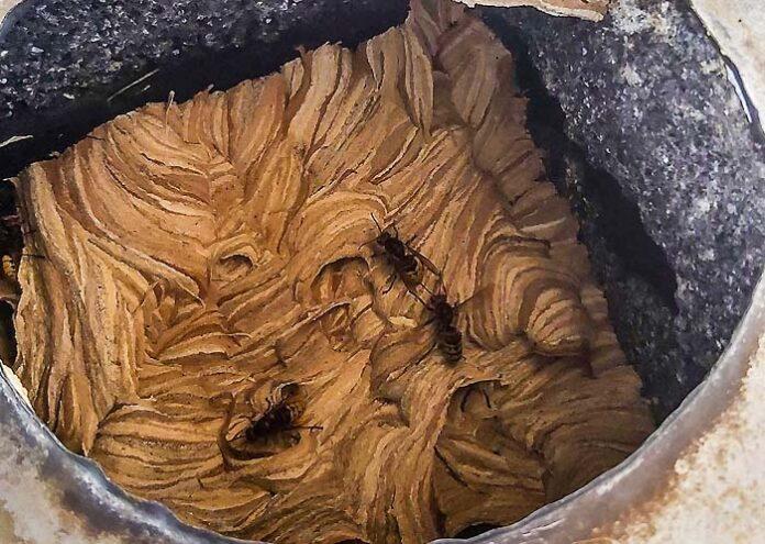 Forstenried: Hornissen im Kamin
