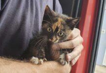 Feuerwehr rettet Katze aus Notlage