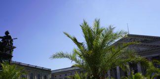 Erst Theresienwiese, dann Max-Joseph-Platz: Zweiter Palmengarten bringt Urlaubsgefühl in die Stadt