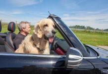 Test Tiersicherung im Auto