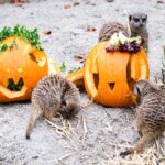 Kohldampf auf Kürbis: Halloween in Hellabrunn