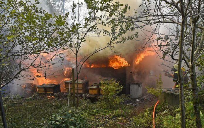 Feldmoching: Bienenvölker überleben Feuer