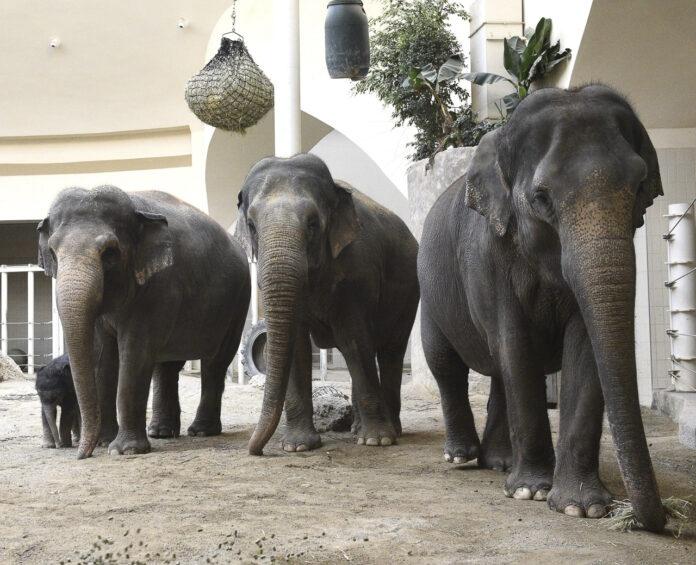 Hellabrunn: Elefant Otto trifft seine Tanten