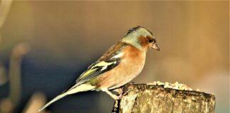 Deutschlands größte Vogelzählung: Stunde der Wintervögel