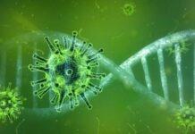 Dem Gen-Code auf der Spur - Überlappendes Gen in SARS-CoV-2 gefunden