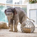 Neues von Elefantenbaby Otto
