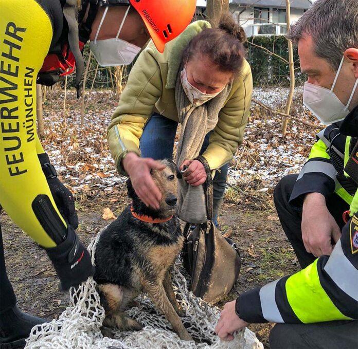 Hund und Katz: Feuerwehr leistet tierische Hilfe