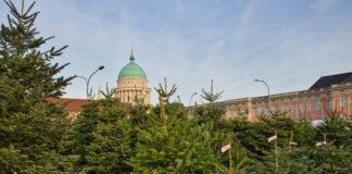 Weihnachtsbaumverkauf bleibt zulässig