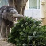 Weihnachtsfreude in Hellabrunn