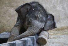 Hellabrunn: Neues von Elefantenkind Otto